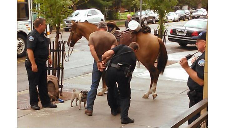 Aresztowany za jazdę konną pod wpływem!